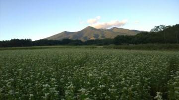夕暮れの八ヶ岳と蕎麦畑
