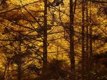 日之影入林道