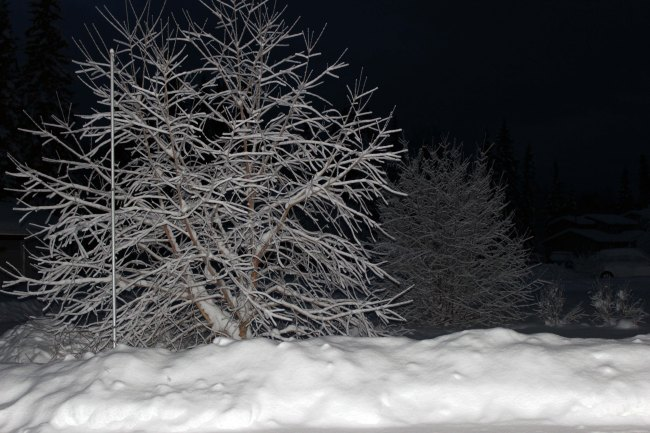 #Alaska Snow covered trees at night