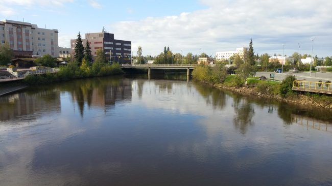 """fresh leaves on trees along the """"Chena River"""" by Jason Rossiter is licensed under CC BY-NC 2.0"""