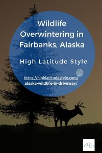 Read more about the article In Alaska, You Get Excited by Wildlife in the Driveway