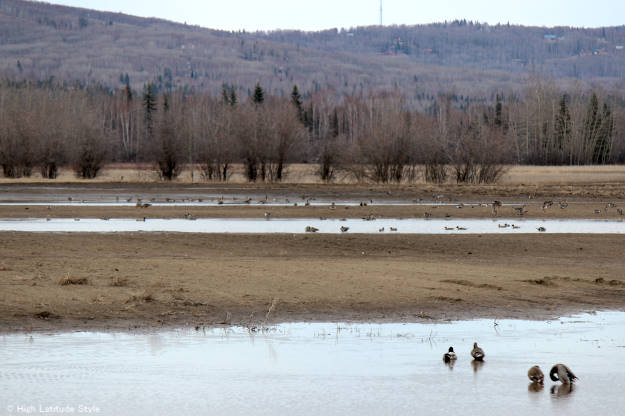 Alaska wildlife watching a bird food pitstop