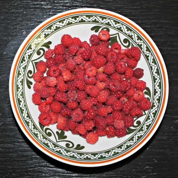 berrypicking Alaska raspberries
