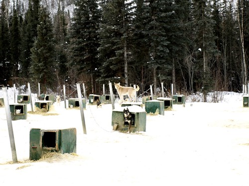 """Sled Dogs"" by PunkToad is licensed under CC BY 2.0"