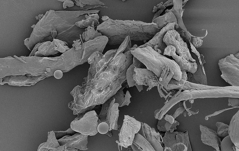microscopic house dust NIAID, CC BY 2.0