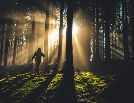 a highly sensitive person forest bathing