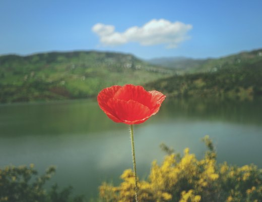 a flower represents the sensitive nature of a highly sensitive person