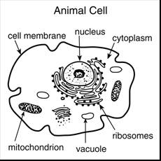 Look again at the picture of the cell. The structures