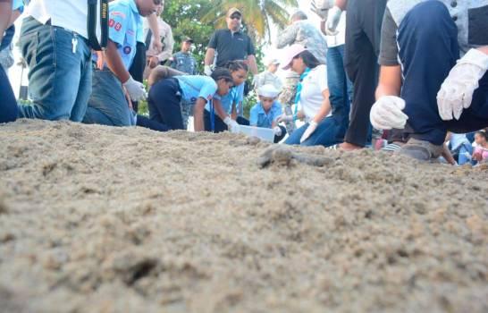 """Liberan 105 tortugas marinas de la especie """"Chelonia mydas"""" en playa Sans Souci"""