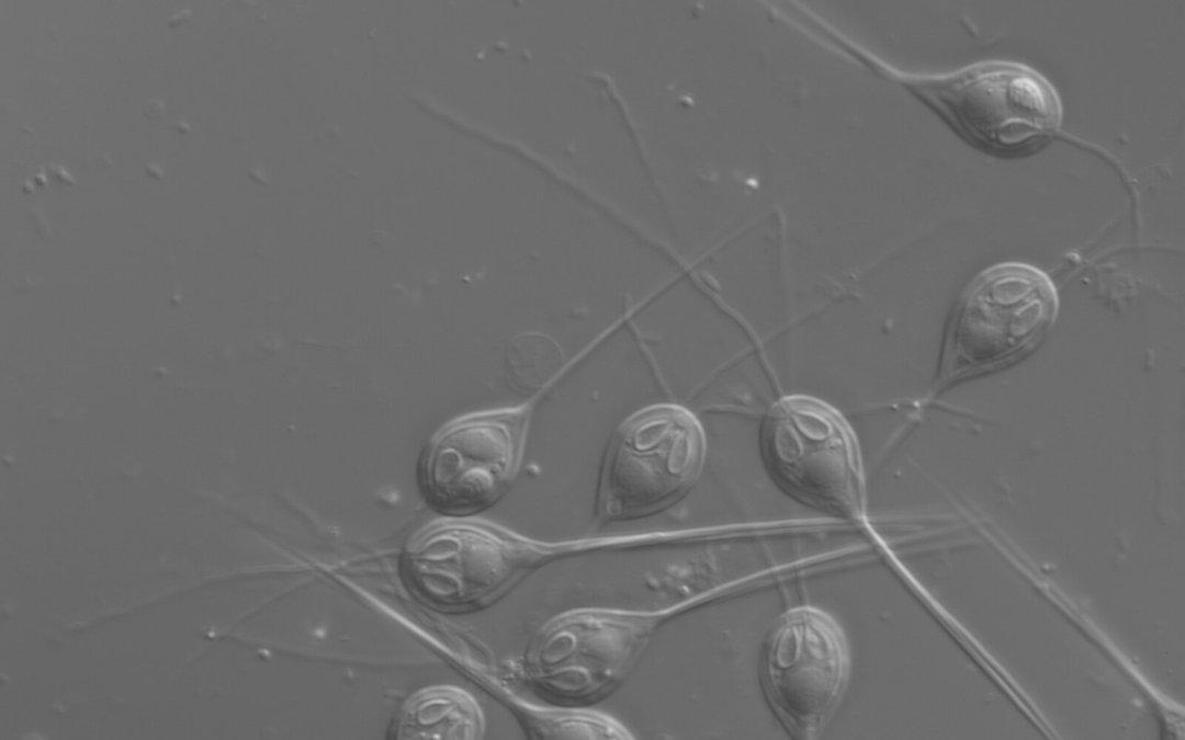 Encontrado el primer animal sin ADN mitocondrial