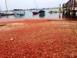 Climate Changes & Crab Invasions