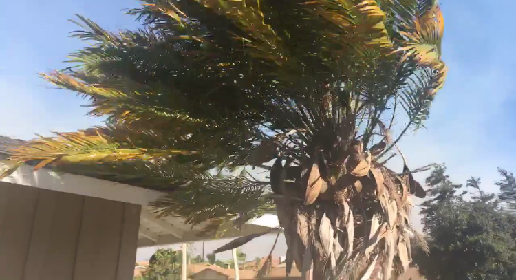 Staying safe in the Santa Ana winds