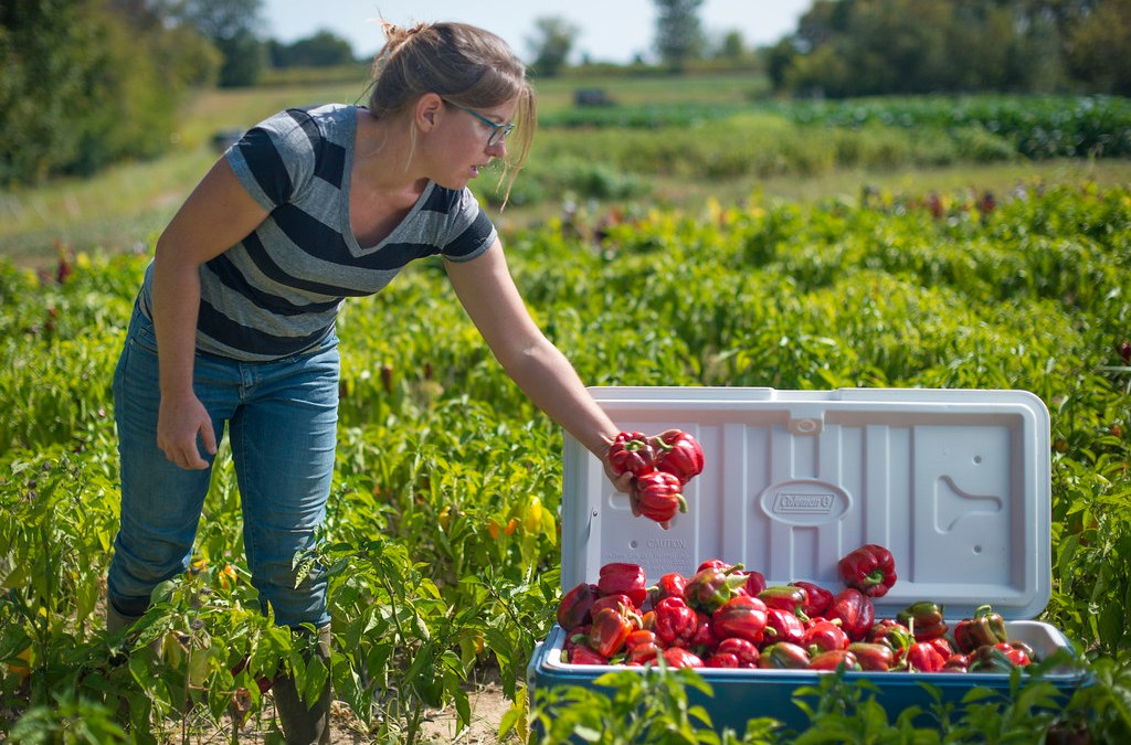 Opinion: Purchasing farm-to-table foods during the pandemic is important