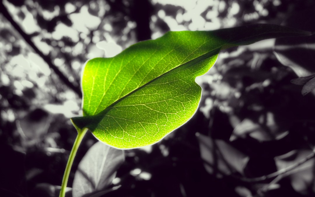 Opinion: Is chlorophyll water really effective?