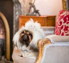 Dogs are welcome at The Hughenden Hotel