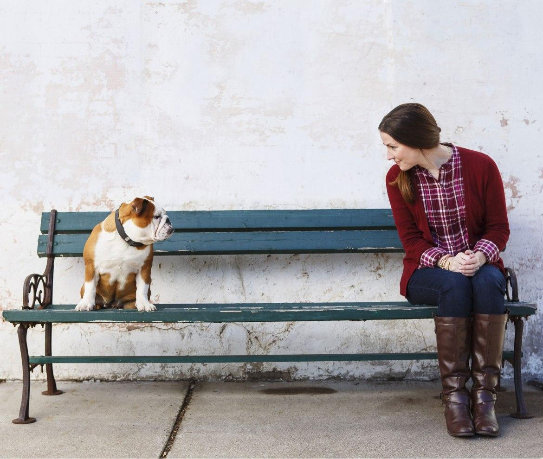 Cão Hazel Bulldog com Voyce, da i4C Innovations