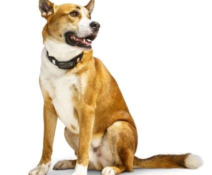 Cão Ronan mestiço com Voyce, da i4C Innovations