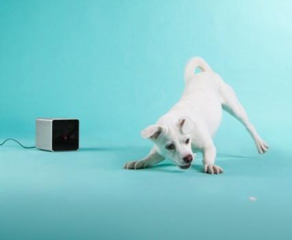 Pet Cube - Companhia para animais de estimação