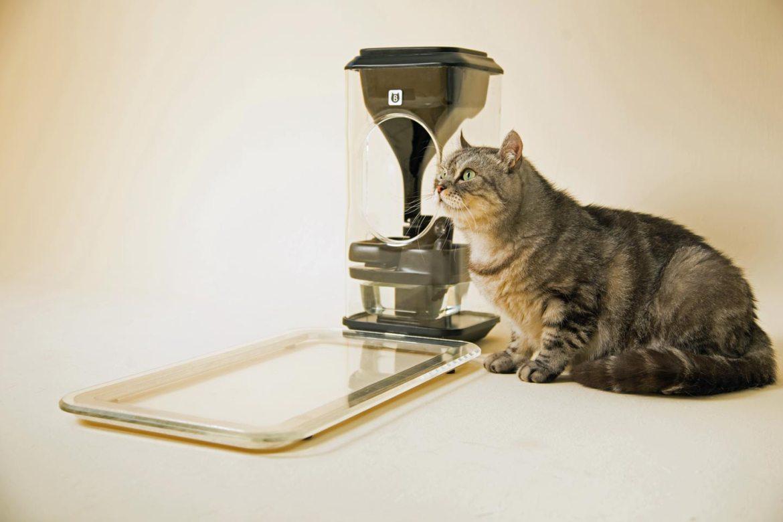 Gatos. Bistro, para monitorizar a saúde através do comedor