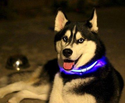 Cães e Gadgets. Halo Mini