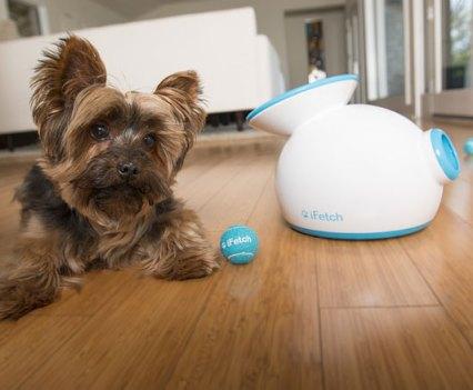 Cães e Gadgets. iFetch