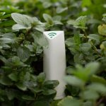 Plantas e Gadgets: Verde que te quero verde