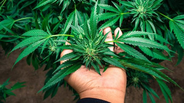New Attempts to Outlaw Home Growing Are Counterproductive and Stupid
