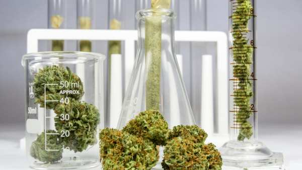 Has Federal Marijuana Research Evolved?