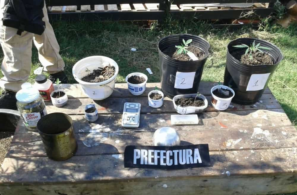 Argentine Feds Flex Single Weed Plant and Seedlings Bust On Twitter