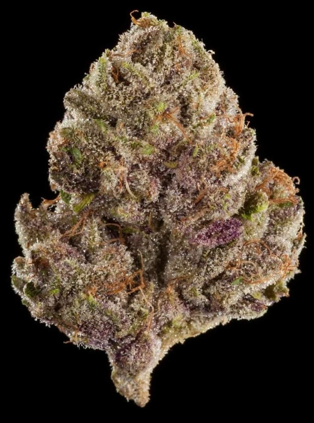 Winners of the 2018 World Cannabis Cup