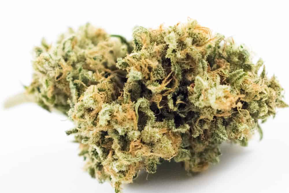 Winners of the September 2018 Michigan Cannabis Cup