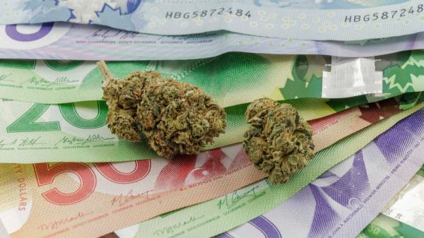 Alberta Health Services Just Refused a $6,000 Donation From Cannabis Club