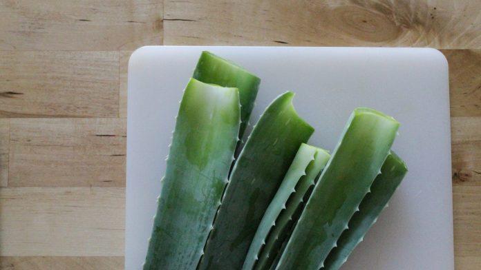 DIY All-Natural Aloe Shampoo