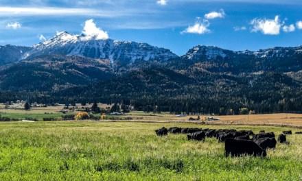Intensive grazing system benefits Highview Ranch