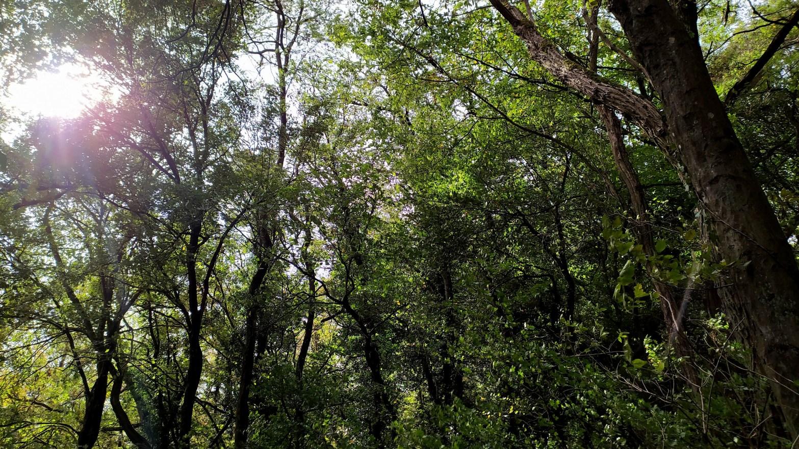 Saarland woods