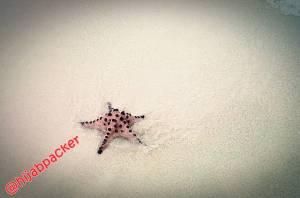 bintang laut pulau pasir belitong