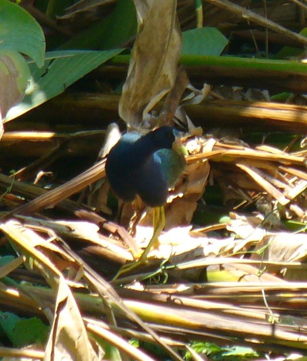 Aves de Humedal II (2/6)