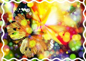 vlinderkleuren