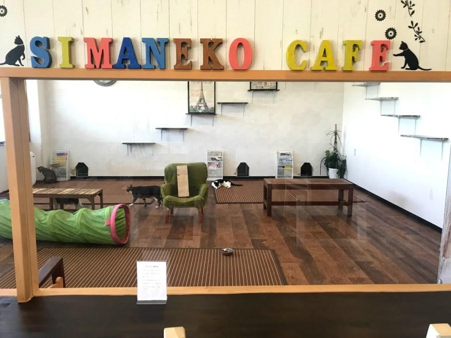 shimanekocafe2