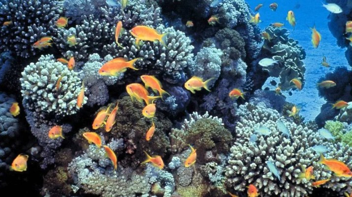 Snorkeling at the coral reef in Eilat, Israel