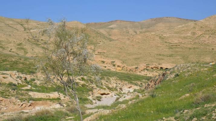 4 Cisterns Wadi near Arad