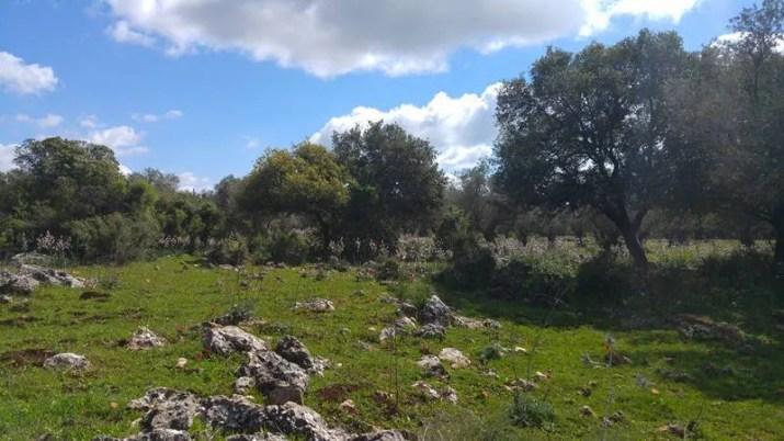Typical scenery on mount Carmel