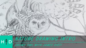 how to draw a snowy owl