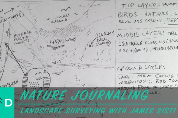 nature journaling and landscape drawing