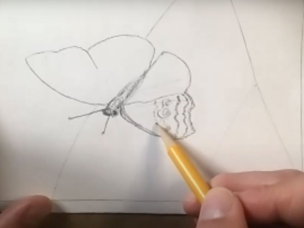 how to draw a butterfly - step 4