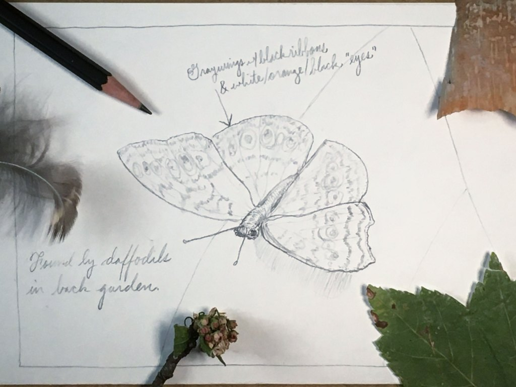 how to draw a butterfly - step 5