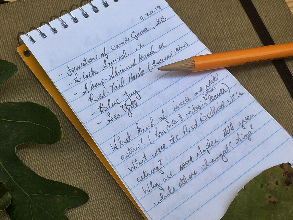 nature journaling prompts 3