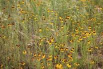 Lots of wildflowers in bloom. (JP)