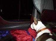 Dakota listening to the coyote howl.