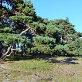 Snelle hap & hike Trage Tocht Blaricum, 6 augustus 2020